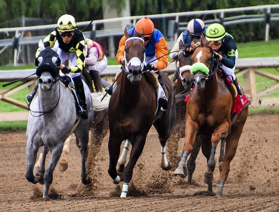 horses-3811270_960_720.jpg
