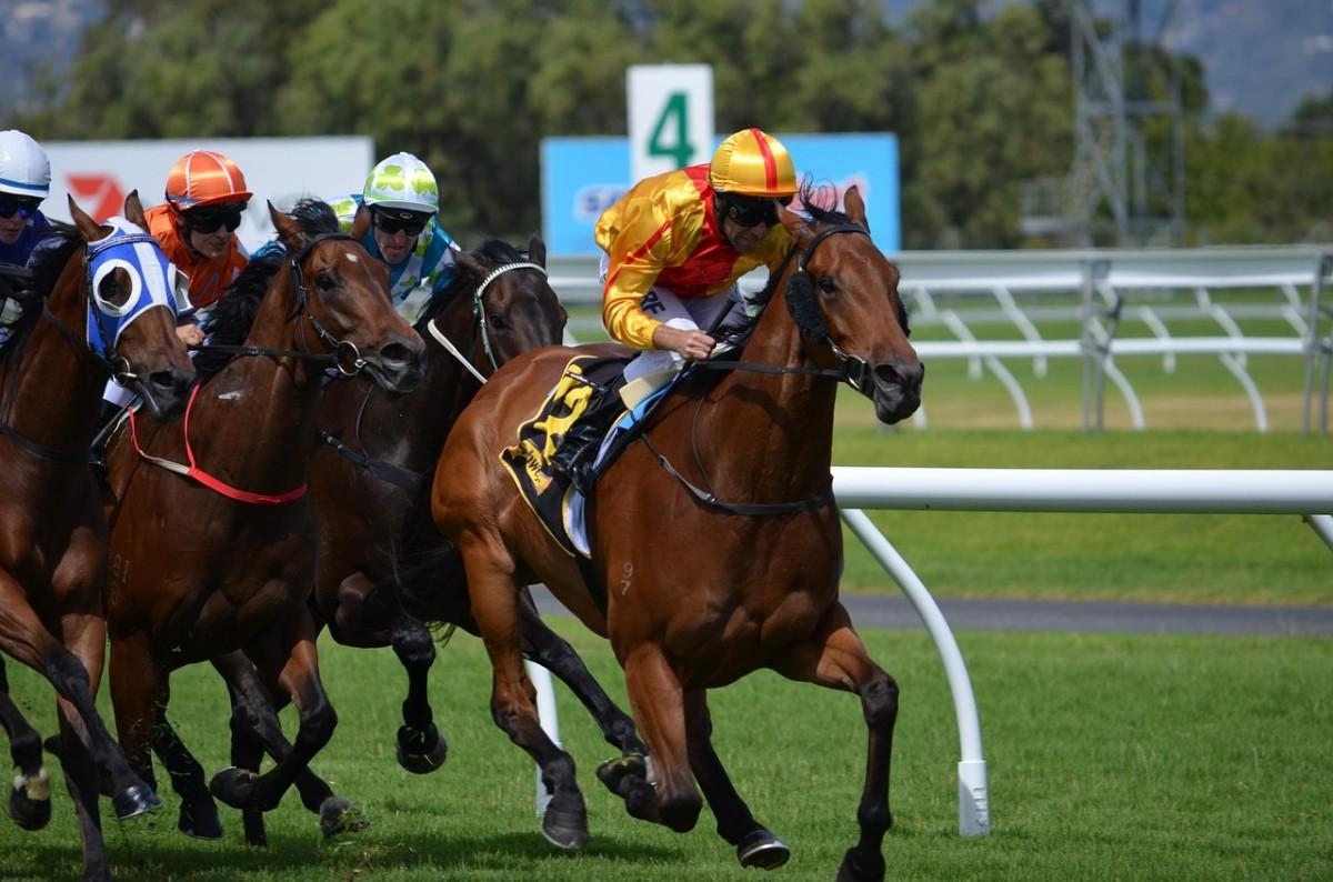 horses-380406_1280.jpg